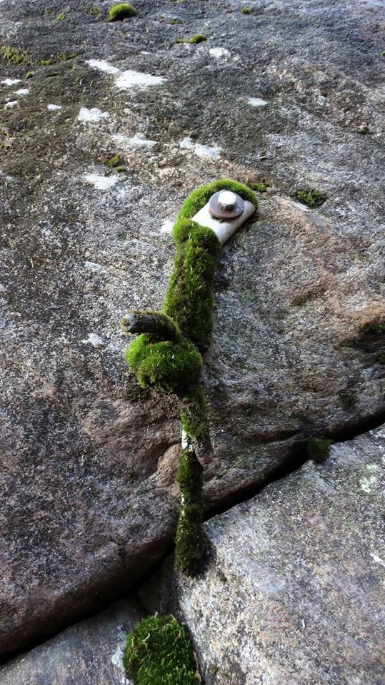 Mossy Anchor.